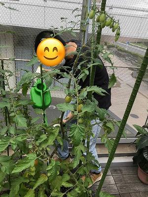 花壇ボランティア